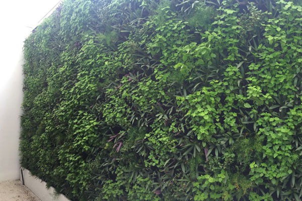 emirates-hills-private-client-green-wall-outdoor